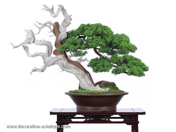 Le bonsaï japonais